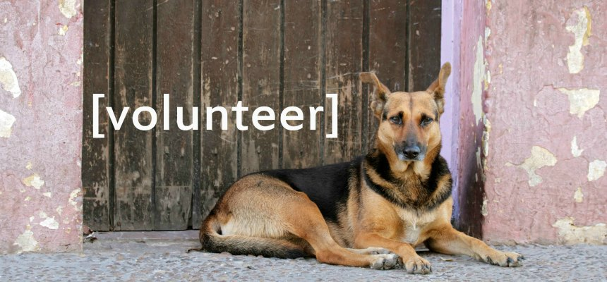 4PAWS Volunteer